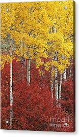 Grand Teton Viii Acrylic Print by John Blumenkamp