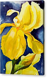 Grandma's Yellow Iris Acrylic Print by Janis Grau