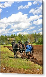 Grandpa And His Team Of Horses At Old World Wisconsin Acrylic Print by Christopher Arndt