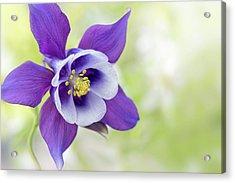 Granny's Bonnet Flower Acrylic Print by Jacky Parker