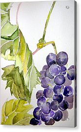 Grape Vine Acrylic Print by Mindy Newman