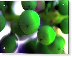 Grapes Acrylic Print by Bransen Devey