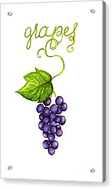Grapes Acrylic Print by Cindy Garber Iverson