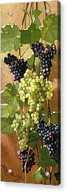 Grapes Acrylic Print by Edward Chalmers Leavitt