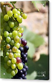 Grapes Acrylic Print by Jane Rix