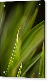 Grass Abstract 2 Acrylic Print by Mike Reid