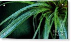 Grass Dance Acrylic Print by Linda Shafer