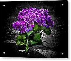 Gravely Beautiful Acrylic Print by Karen M Scovill