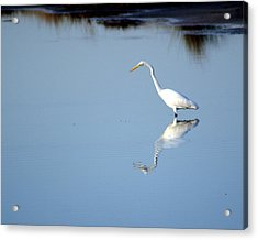 Great Blue 2 Acrylic Print by Marty Koch
