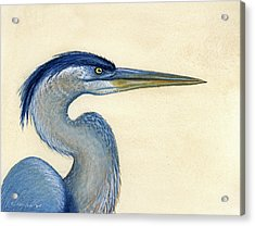 Great Blue Heron Portrait Acrylic Print by Charles Harden