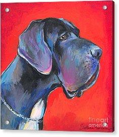 Great Dane Painting Acrylic Print by Svetlana Novikova