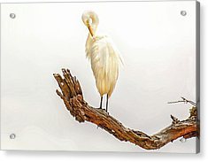 Great White Egret #3 Acrylic Print by Donnie Smith