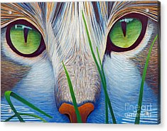 Green Eyes Acrylic Print by Brian  Commerford