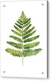 Green Ferns Watercolor Poster Acrylic Print by Joanna Szmerdt