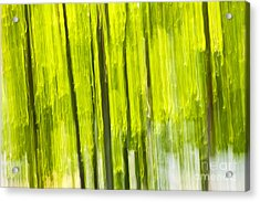 Green Forest Abstract Acrylic Print by Elena Elisseeva