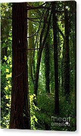 Green Forest Acrylic Print by Carlos Caetano