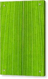 Green Leaf Acrylic Print by Frank Tschakert