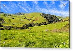 Green Meadow Santa Ynez Valley Ca Acrylic Print by Eyal Nahmias