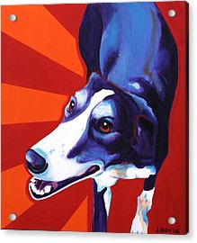 Lurcher - Evie Acrylic Print by Alicia VanNoy Call