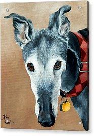 Greyhound Acrylic Print by Alexandra Cech