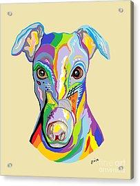 Greyhound Acrylic Print by Eloise Schneider
