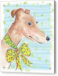 Greyhound Acrylic Print by Jo Chambers