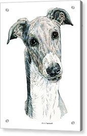 Greyhound Acrylic Print by Kathleen Sepulveda