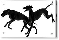 Greyhounds Travelling At 45 Mph Acrylic Print by Christine Till