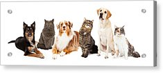 Group Of Cats And Dogs Acrylic Print by Susan Schmitz