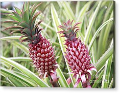 Growing Red Pineapples Acrylic Print by Brandon Tabiolo - Printscapes