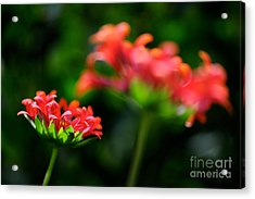 Growing Up Acrylic Print by Lois Bryan