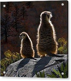 Guarding Meerkats Acrylic Print by Thanh Thuy Nguyen