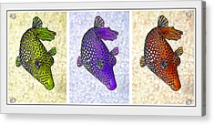 Guinea Fowl Puffer Fish Triptych Acrylic Print by Bill Caldwell -        ABeautifulSky Photography