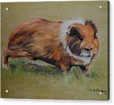 Guinea Pig Acrylic Print by Tanya Patey