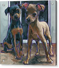 Guinness And Bailey Acrylic Print by Nadi Spencer