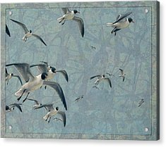 Gulls Acrylic Print by James W Johnson