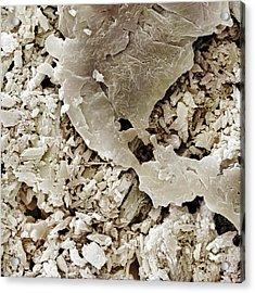 Gypsum Crystals Sem Acrylic Print by Power and Syred