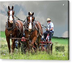 h27 Acrylic Print by Tom Griffithe