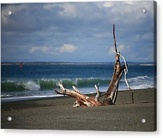 Halfmoon Bay Driftwood Acrylic Print by Mike Coverdale