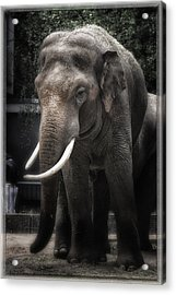 Hanging Out Acrylic Print by Joan Carroll
