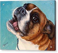 Happy Boxer Dog Acrylic Print by Dottie Dracos