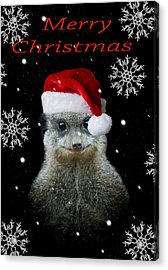 Happy Christmas Acrylic Print by Paul Neville