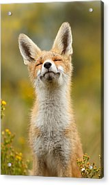 Happy Fox Acrylic Print by Roeselien Raimond