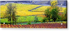 Harvest Time Acrylic Print by Margaret Hood