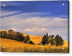 Harvested Acrylic Print by David Patterson