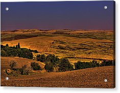 Harvested Fields Acrylic Print by David Patterson