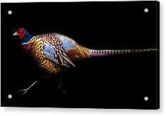 Have A Pheasant Day.. Acrylic Print by Martin Newman