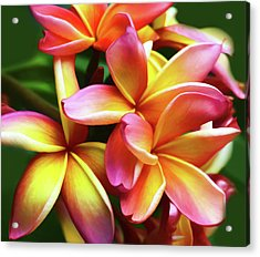 Hawaiin Plumeria Wall Art Acrylic Print by Georgiana Romanovna