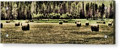 Hay Harvest Acrylic Print by David Patterson