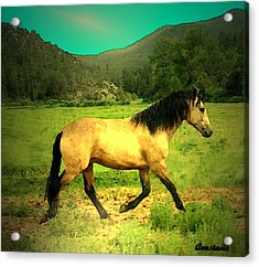 He Paweth In The Valley And Rejoiceth In His Strength  Acrylic Print by Anastasia Savage Ealy